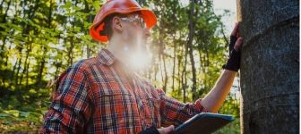 Earn a Forestry Degree